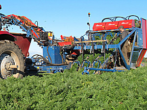 GRIMME(格立莫)T 300胡萝卜收获机