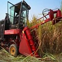 中首信4GZ-GZ100/125甘蔗收割機
