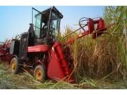 4GZ-GZ100/125甘蔗收割机