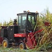 中首信4GQ-GZ180甘蔗收割机