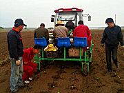 成帆2TX-4蔬菜移栽机