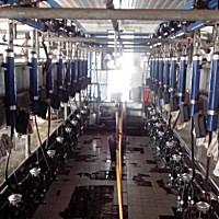 利拉伐(DeLaVal)9JP-2X12挤奶机