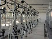 中置式中置式擠奶系統