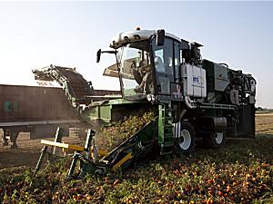 意大利MTS THV自走式番茄采收机