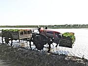 黑龙江建三江农垦海波7YS-1200水田运苗车