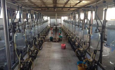 优利农9J-YG-28鱼骨式挤奶机