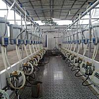 ORION9J-YGZD-24挤奶机