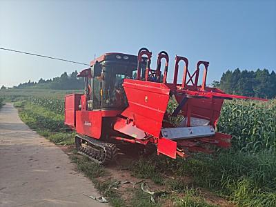 谷耘丰4YZT-2自走式鲜食玉米/甜玉米收获机