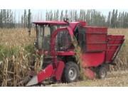 牧神4YZ-3玉米收獲機作業視頻