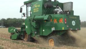 寧聯谷物聯合收獲小麥作業現場
