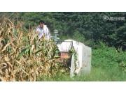 """沃得锐龙""""2015升级版""""玉米收割视频 (上)"""