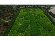 茶山作业现场视频-深圳高科新农技术有限公司
