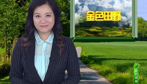 植保無人機完成全球首例雜交谷子全程機械化制種——深圳高科新農技術有限公司