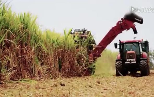 凱斯8000型甘蔗收割機作業視頻