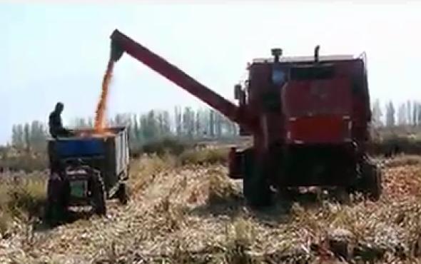 新疆牧神4YZT-7自走式玉米籽粒機收獲機作業視頻