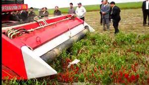 新疆牧神4JZ-3600自走式辣椒收獲機作業視頻