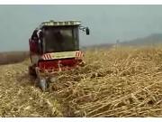 勇猛玉米收割机收倒伏能力作业视频
