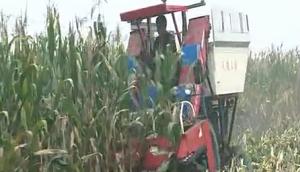 沃德4Y-4背負式玉米收獲機作業視頻