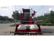 隆硕4QZ-2200自走式青贮饲料收获机作业视频