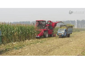 新疆牧神4YZB-7玉米收获机作业视频