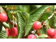 果园机械宣传片--河北中农博远农业装备有限公司