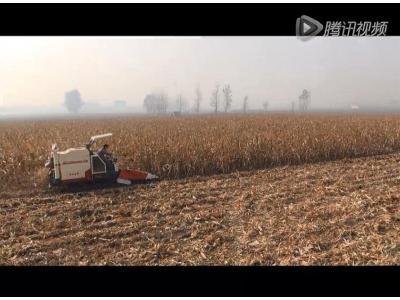 沃得銳龍新型玉米割臺收割作業視頻