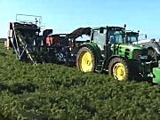 格立莫丹麦阿萨力胡萝卜收获机三行牵引式作业视频