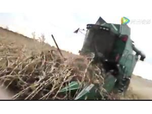 常發CF808玉米籽粒收割機收倒伏作業視頻