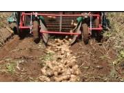 希森天成4UX-170A马铃薯收获机作业视频