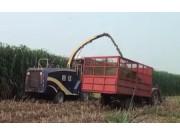 河南四达4QZ-10A自走式青贮饲料机作业视频