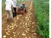 曲阜圣隆手扶土豆收獲機作業視頻