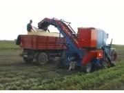 格立莫丹麥阿薩力CM1000 Romania單行背負式胡蘿卜收獲機作業視頻