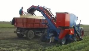 格立莫丹麦阿萨力CM1000 Romania单行背负式胡萝卜收获机作业视频