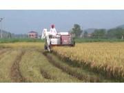 星光至尊610高效水稻收割機作業視頻