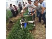 康博JT-HV韭菜收割机作业视频