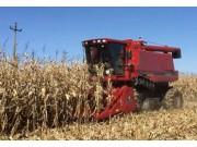 凱斯4088收割玉米作業視頻