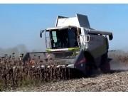科乐收CLAAS LEXIDN560向日葵收割机作业视频