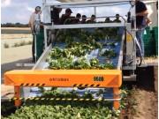 專用于小白菜 上海青 生菜 菠菜的9500蔬菜收獲機作業視頻