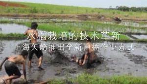 上海矢崎水稻直播机SYG系列作业视频