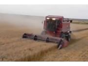 凯斯IH1680收割机作业视频