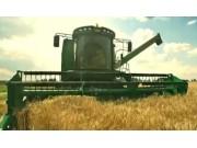 迪馬DM800小麥收割機作業視頻