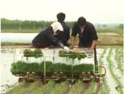 独轮乘坐式水稻插秧机的使用与维护