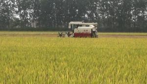 沃得銳龍收早稻作業視頻
