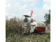 沃得銳龍玉米割台作業視頻