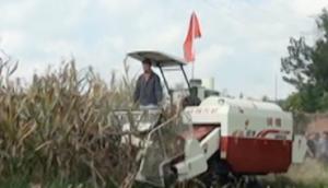 沃得銳龍玉米割臺作業視頻
