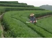 采茶機的正確使用與維護
