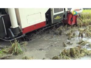 沃得锐龙收割机烂湿地作业视频