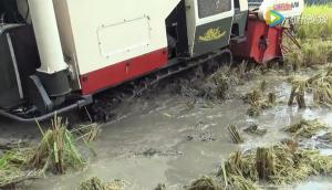 沃得銳龍收割機爛濕地作業視頻
