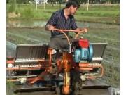 水稻盘育苗机械化移栽技术