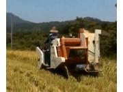沃得迅龍水稻收割作業視頻(一)